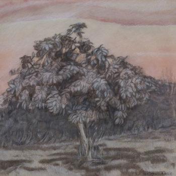 Medlar tree, August, 11/12 am