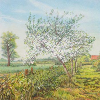 Apples tree in bloom