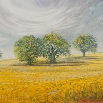 Rapeseed field, Oak trees and grey sky